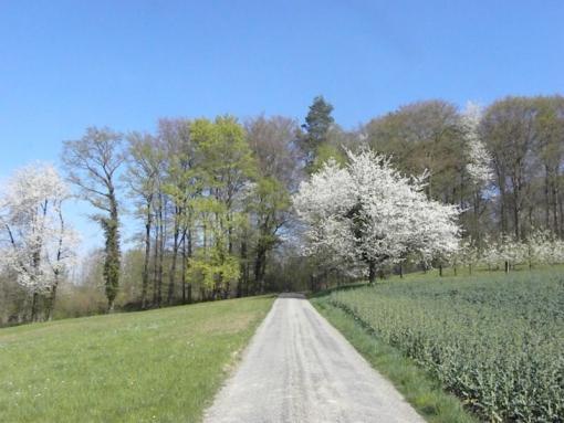 2011_04_08_1572-frahlingswald