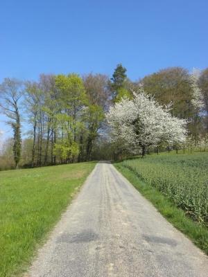 2011_04_08_1573-frahlingswald
