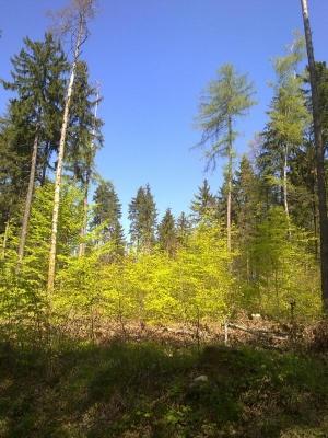 2011_04_18-frahlingswald-2