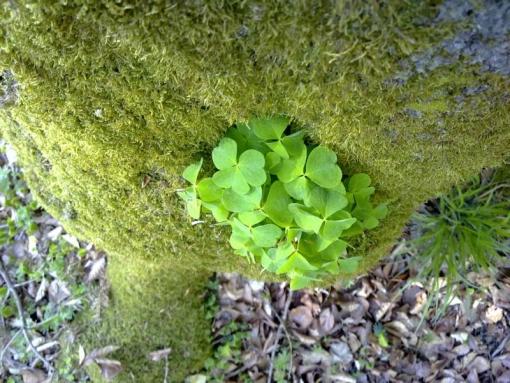 2011_04_18-frahlingswald-4