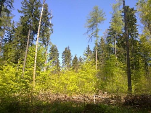 2011_04_18-frahlingswald