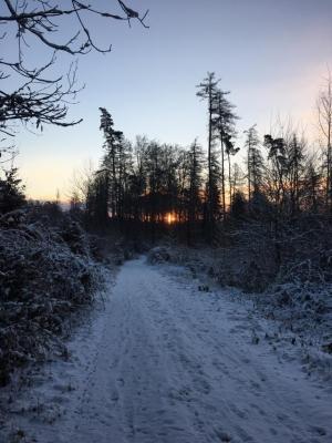 K1024_2017-01-06 Sonnenaufgang im Wald
